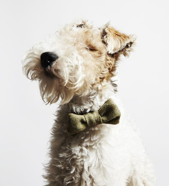Die 10 besten Bilder zu Terriers auf Pinterest | Ferienhäuschen ...