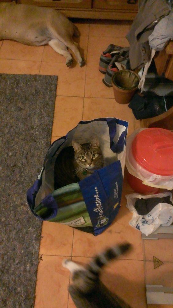 Estoy escondida!