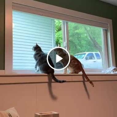 Gatos tentando pegar algo do outro lado
