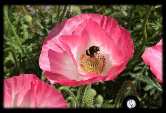 Bee: Sarra Hornby