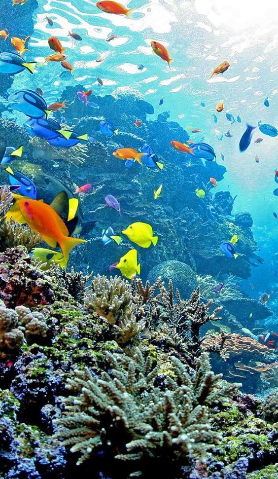 ハワイの海と熱帯魚