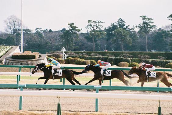 2014.01.05 Nakayama Race Course  photo by teitania