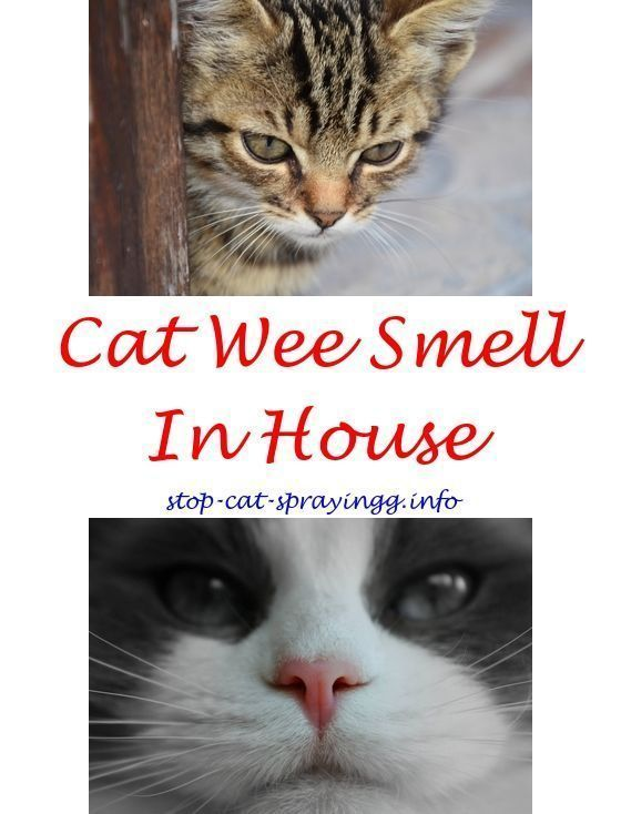 Best Air Purifier For Pets Get Rid Of Awful Pet Odors Male Cat Spraying Cat Spray Smell Cat Spray