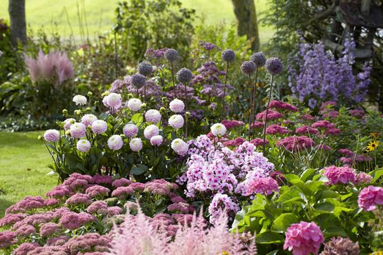 Hydrangeas Flower beds and Google search on Pinterest