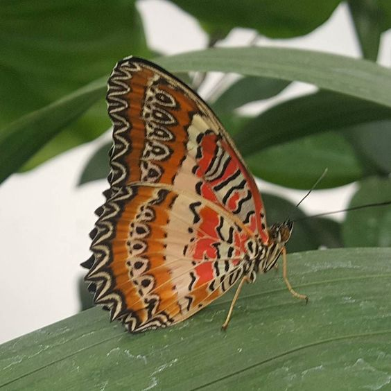 #nofilter #butterfly at the #nhm London