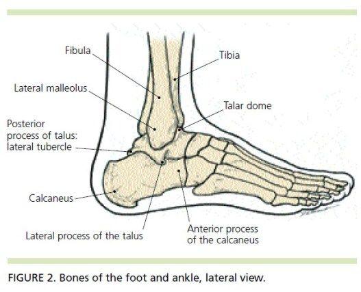 sprain foot anatomy and anatomy on pinterest : ankle bone diagram - findchart.co