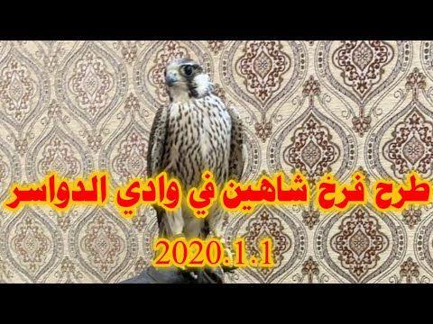 طرح فرخ شاهين وادي الدواسر 2020 1 1 Youtube Falcon Hunting Painting Falcons