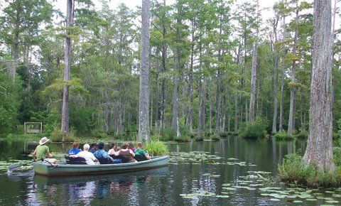 Cypress Gardens, Moncks Corner, SC (where The Patriot was filmed)