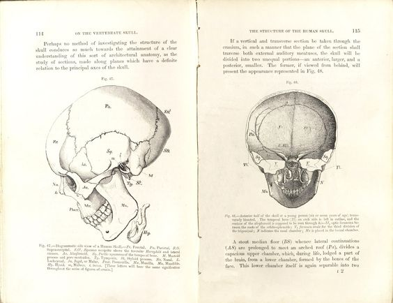 Rare books - Structure of the Human Skull