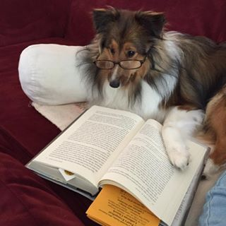 This dog who had to grab their glasses before they started reading. | 21 Dogs With Books Who Are Too Cute For Words