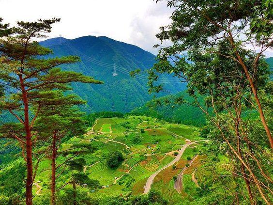 この景色本当に日本なの?日本のマチュピチュ「天空の茶畑」が岐阜に存在した | RETRIP[リトリップ]