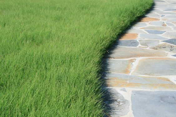 Hey, California, You Can Still Have a Lawn! Here are 5 Water Wise Alternatives