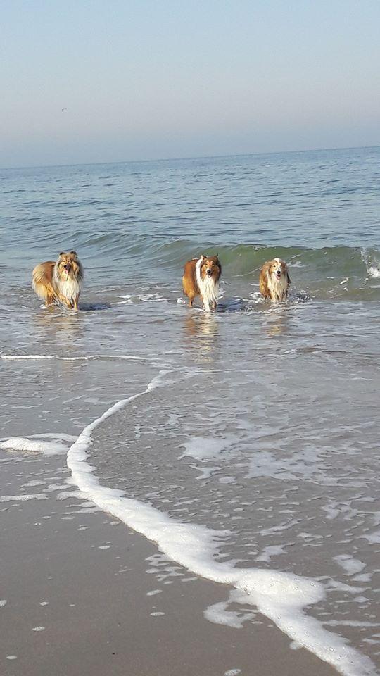Strand Von Neeltje Jans Danke An Claudi Fur Das Bild Holland Hundefreundlich Hundestrand Niederlande Hundeurlaub Zeeland