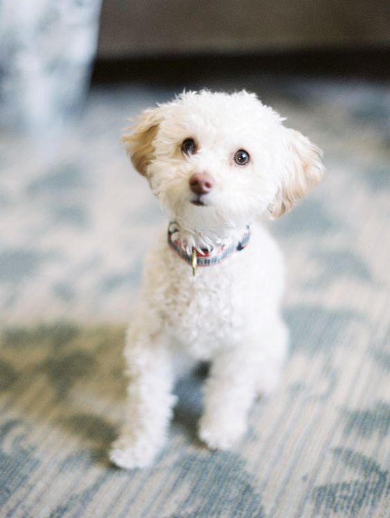 Puppy: Fav Dogs, Cute Puppy Photos, Wedding Styles, Dogs Zoe, Photography Visit