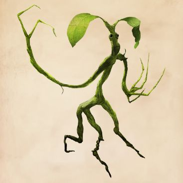 Fantastic Beasts Glossary– Bowtruckle: