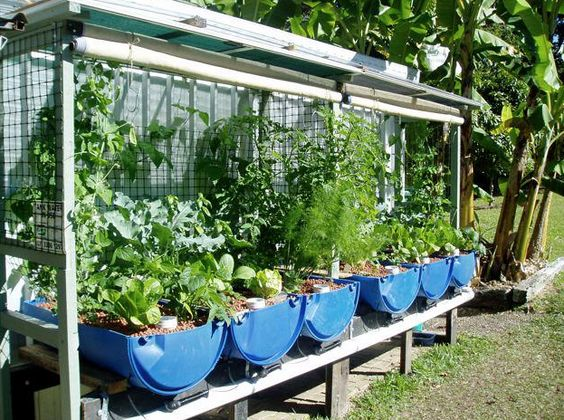 Aquaponic idea small scale love the use of the tennis for Aquaponics hawaii