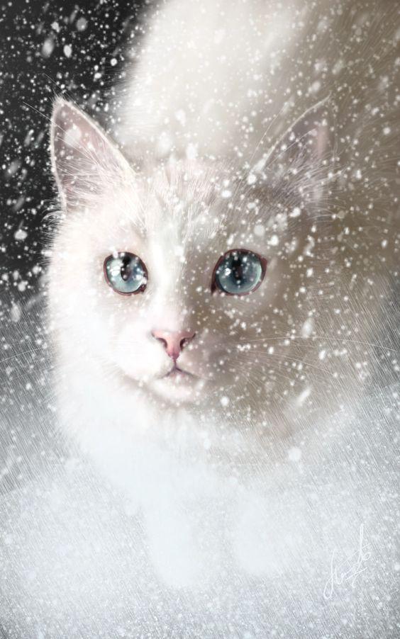 #snow #cat #ice #night