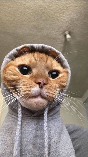 7 Ways To Read Your Cat S Mood Cute Baby Cats Cute Baby Animals Baby Cats