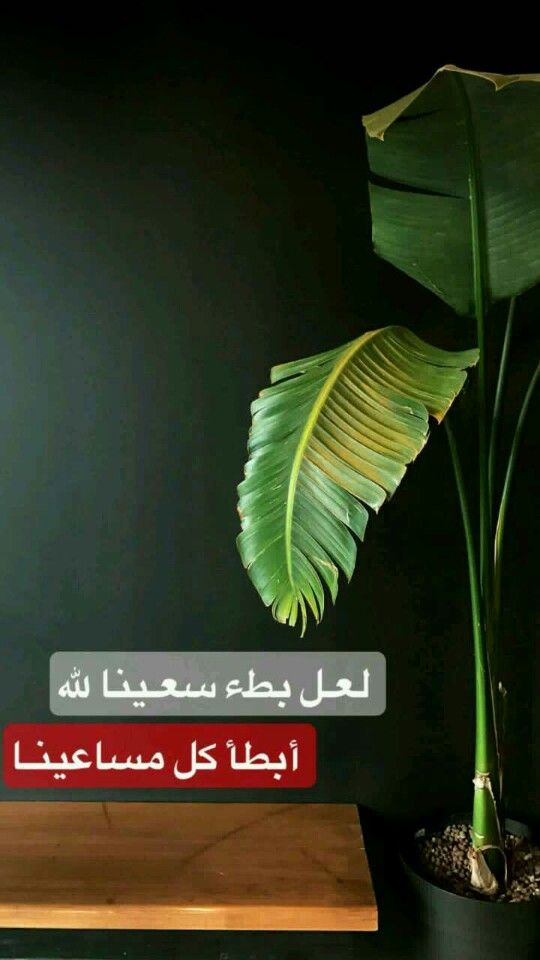 Pin By Sara Art94 On Arabic English Quotes English Quotes Arabic English Quotes Arabic Quotes