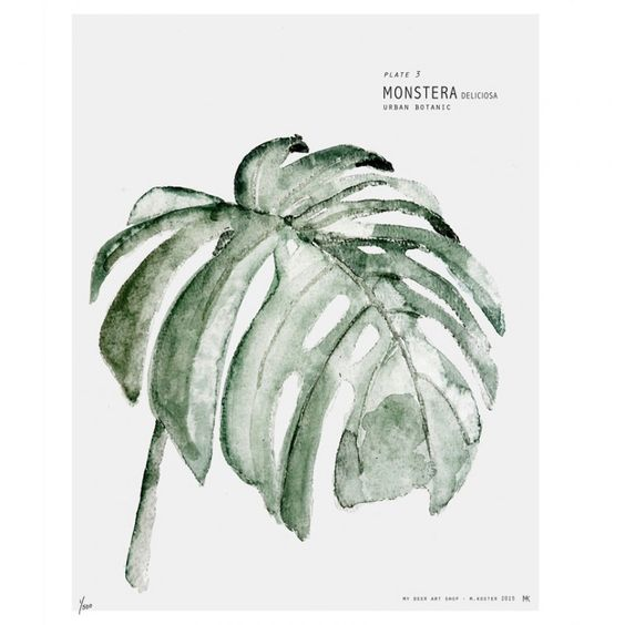 Affiche Urban botanic Monstera: