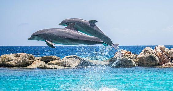 EL RESPETO POR LOS ANIMALES... http://globosvigo.com/el-respeto-por-los-animales/