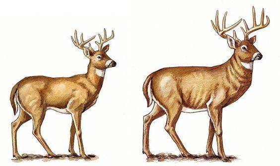 Buck Matures 120