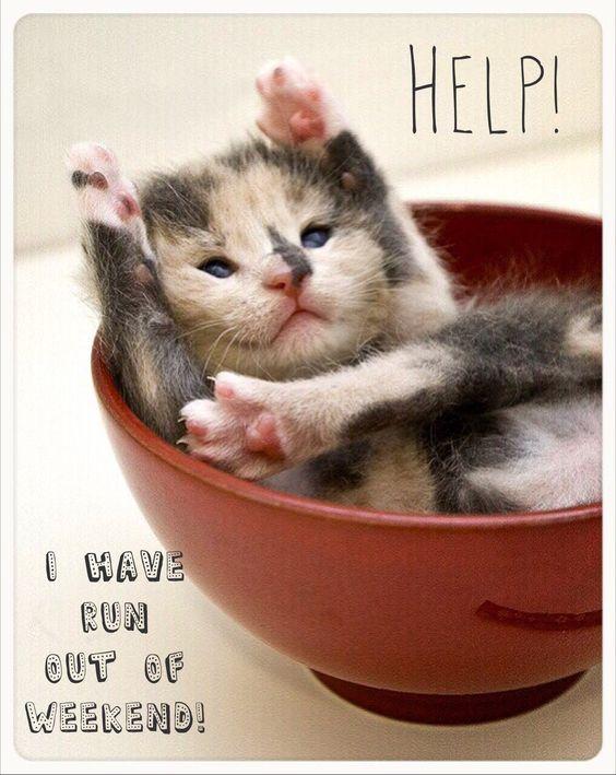 Sunday night  weekend over  start of new week  animal humor  cute cat  f...
