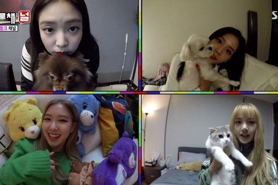 BLACKPINK Shows Off Their Adorable Pets