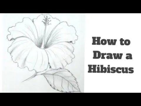 رسم سهل رسم وردة بسيطة وجميلة بقلم الرصاص كيفية رسم وردة للمبتدئين تعليم الرسم رسومات سهله Yo Hibiscus Flower Drawing Hibiscus Drawing Flower Drawing