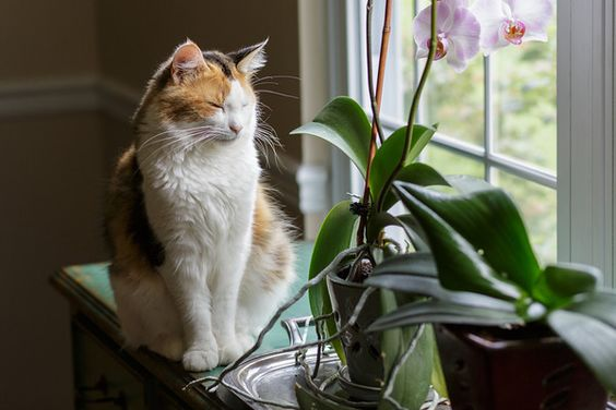 Cat with orchid