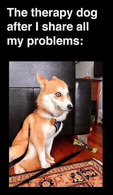 More Funny Pinterest Pins Funny Animal Jokes Funny Dog Memes Funny Animal Memes