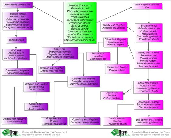 microorganisms  charts and flowchart on pinterestbacteria identification flow chart         unknown microorganisms   create flow chart online