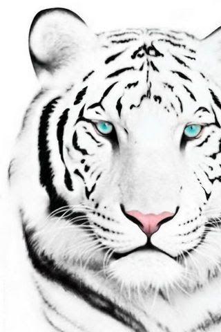 Kumpulan Gambar dan Wallpaper Harimau | Alamendah's Blog