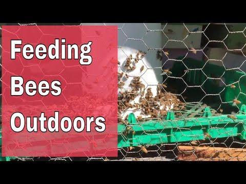 Feeding Bees Sugar Water How Why Carolina Honeybees Feeding Bees Bee Bee Colony