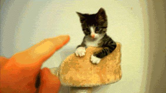 Котик и палец