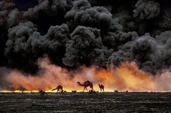 In the midst of the conflagration of the first Gulf War, camels wandering in search of shrubs and water in the oil fields burning in southern Kweit. This desperate search for food reflects the environmental disaster in a region beset by conflicts. The oil was crucial to this: gushing from wells sabotaged, causing the death of tens of thousands of birds trapped in oily puddles and ponds.
