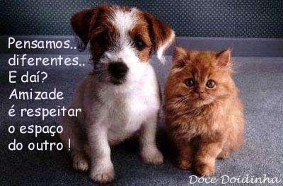 Gatos e Gatinhos e Outros Amigos: Pensamentos do Dia