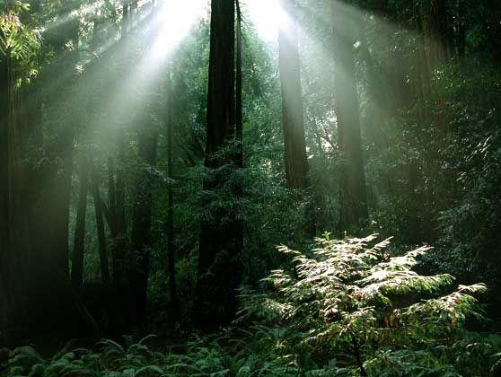 Luna Fina - Plant Spirit Medicine