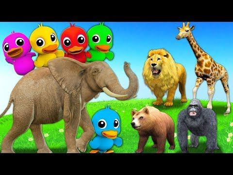 Learn Wild Animals Names Sounds Colors Ducks Five Little Ducks Nursery Rhymes Kids Songs Youtube Animals For Kids Animal Crafts For Kids Animals