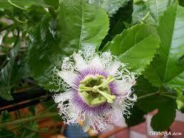Afbeeldingsresultaat voor exotische bloemen