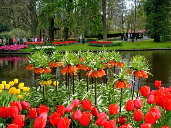 Perto de Lisse, na Holanda fica o Keukenhof, o maior jardim de flores do mundo! Estima-se que sejam plantadas mais de 7 milhões de flores (Tulipas, claro!) todos os anos.