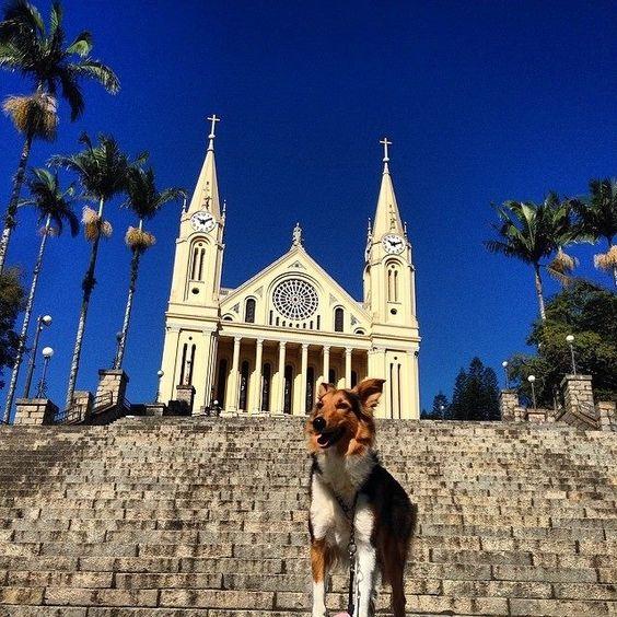 Cachorra da raça Border Collie é a companheira e modelo de catarinense em aventura pelas 295 cidades de SC - Viver SC - Geral - Diário Catarinense
