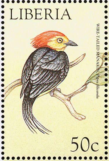 Liberia - El Saltarín Uirapuru, también denominado Saltarín Cola de Alambre, Saltarín Cola de Hilo,es nativo del norte de América del Sur.