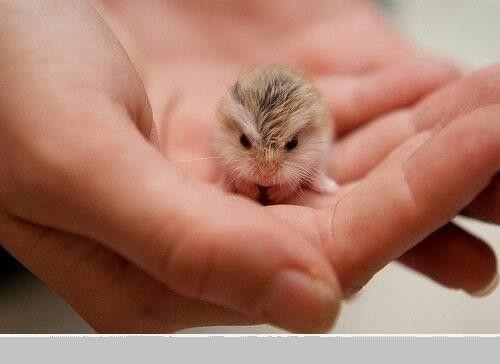 Baby Guinea pig omg!!!!!!!!!!!!!!!!!!!!!