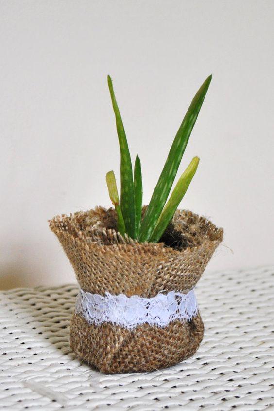 aloe vera plant propagation blog gardening in india. Black Bedroom Furniture Sets. Home Design Ideas