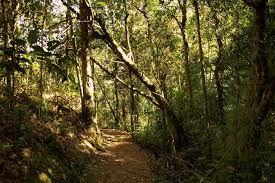 Aquela sensação maravilhosa de contato com a natureza que só uma trilha consegue proporcionar.