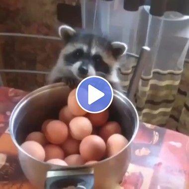 Gato querendo pegar os ovos para o almoço