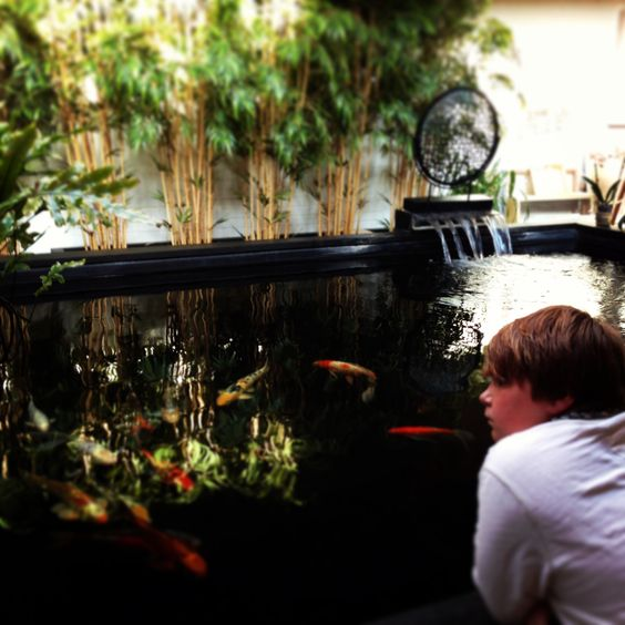 Indoor koi pond aquariums koi ponds pinterest koi for Indoor koi fish pond