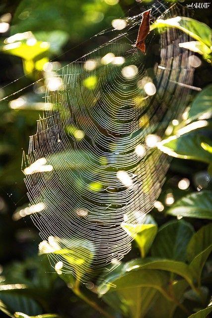 Allotment Websites Gardening Websites Uk Websites For Allotment Associations Spider Geordie Hosting 4 U Gardening Websites Uk Websites Plant Leaves