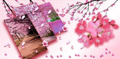 Gambar Gerak Bunga Cantik Sakura Flowers Live Wallpaper Aplikasi Di Google Play 50 Gambar Wallpaper Cantik On Wallpapersafari Bu Bunga Bunga Cantik Gambar